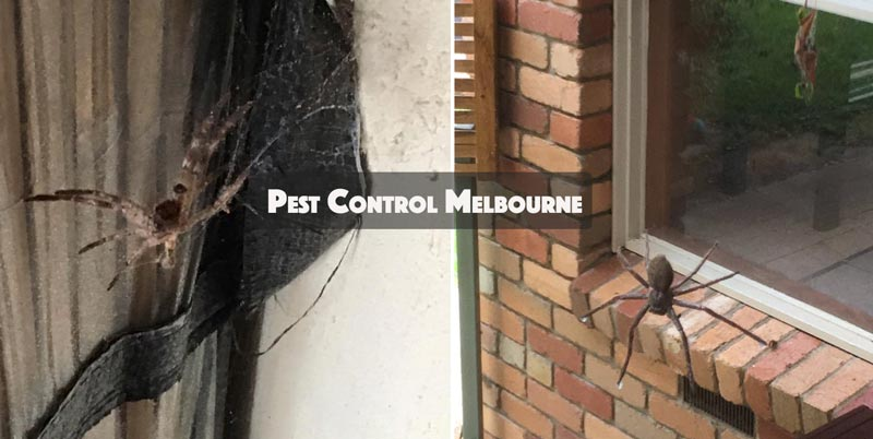 Commercial Pest Control Campbells Creek