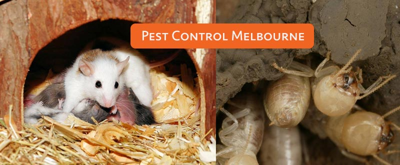 Domestic Pest Control Tallarook