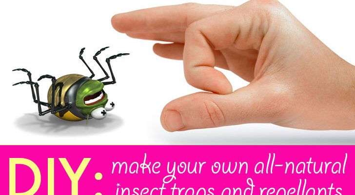 DIY Helps to remove your home pests