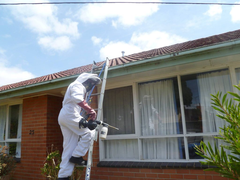 Home Pest Controller Hotham Hill