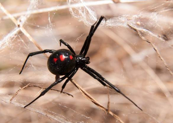 Red Spider Control Flinders