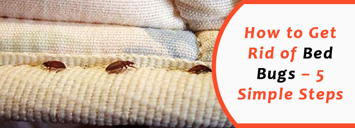 Professional Bed Bugs Services in Melbourne