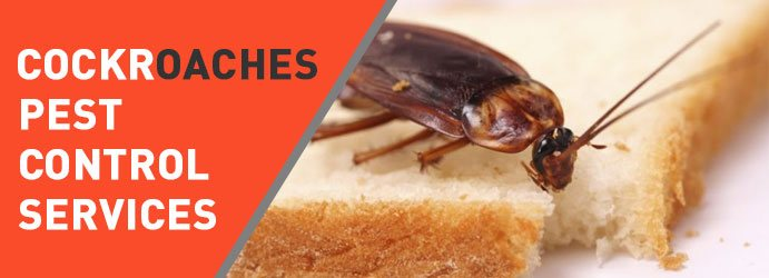 Cockroaches Pest Control Thomastown