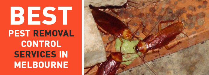 Cockroaches Pest Removal Control Services in Melbourne