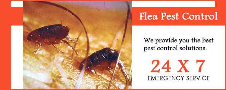 Best Flea Pest Control Oakwood Park