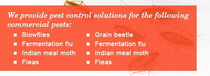 Pest Control Solutions Melbourne