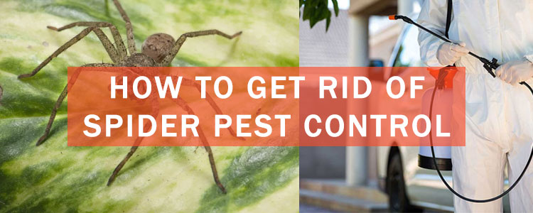How to Get Rid of Spider Pest Control Services