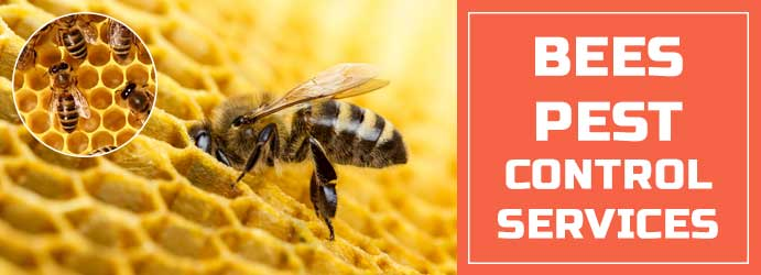 Bees Pest Control Services