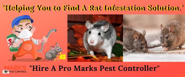 Helping you find a reasonable solution _Hire A Pro Marks Pest Controllers