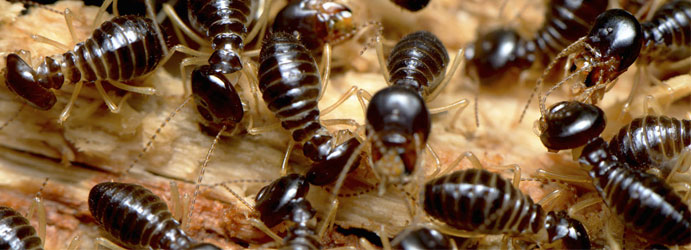 Crawling Pests Control