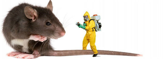 Rodent Pest Control Ashfield