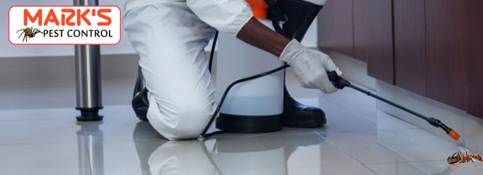 Ant Removal Services Melbourne