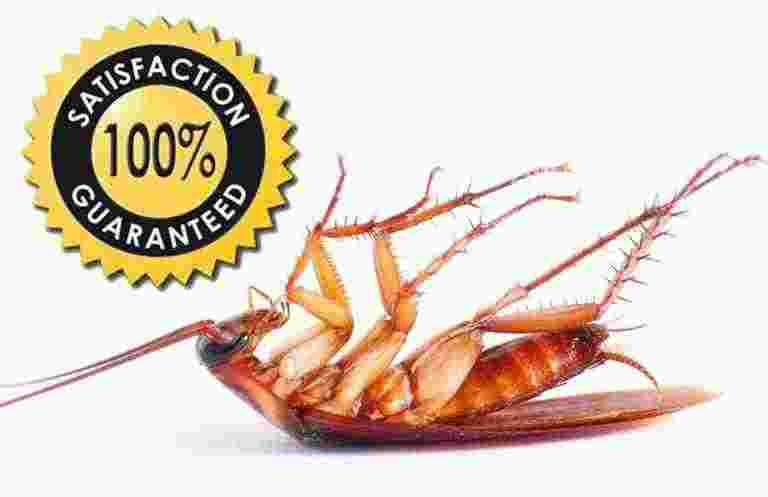 100% Satisfaction Guaranteed Cockroach Pest Control