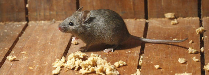 Rodents Pest Control Ombersley