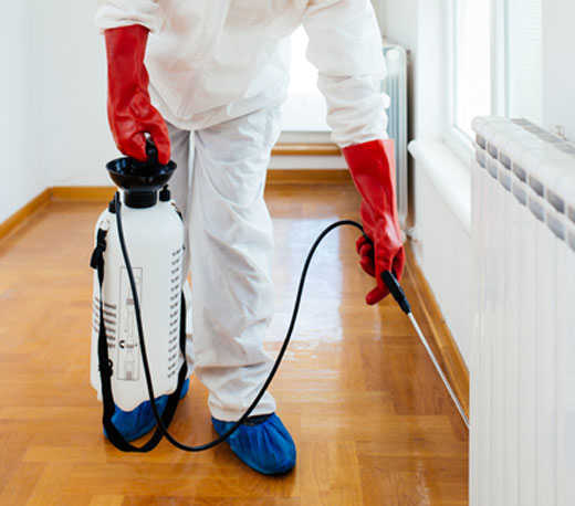 Affordable Pest Control The Gap
