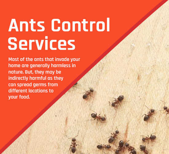 Ants Control Canberra