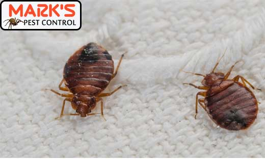 Bed Bug Pest Control Sydney