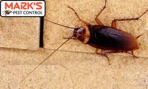 Cockroach Pest Control Claremont Meadows