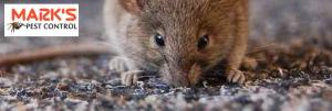 Female Rodent Control