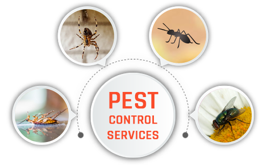 Pest Control Reserve Creek