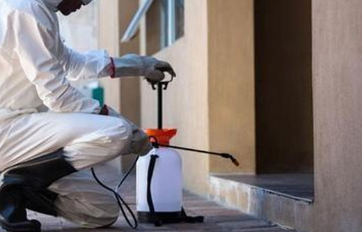 Pest Control White Gum Valley