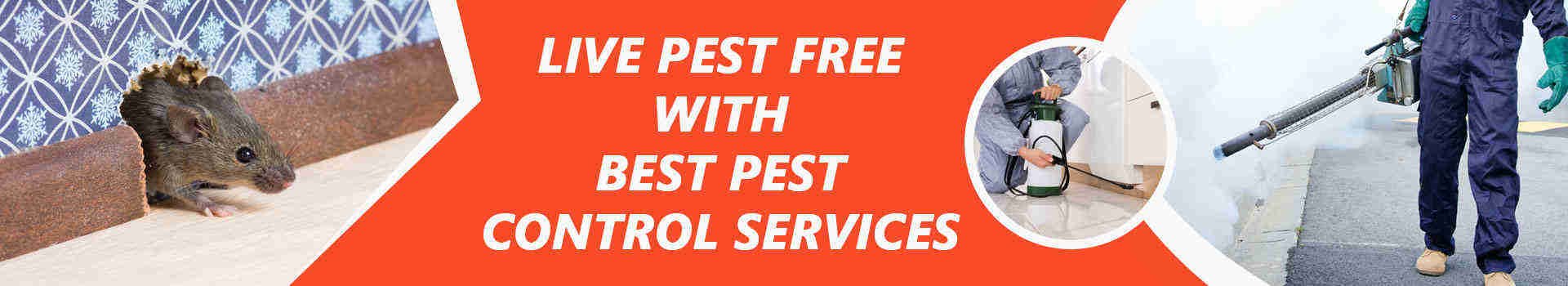 Pest Control Services Brisbane