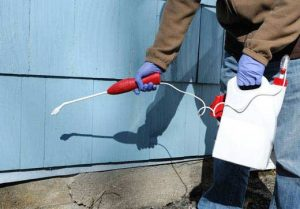 Pest Spray Maldon