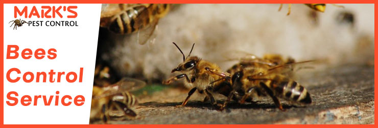 Bees Control Service