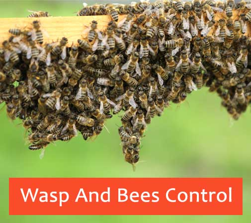 Wasp And Bees Control The Angle
