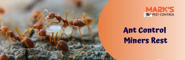 Ant Control Miners Rest