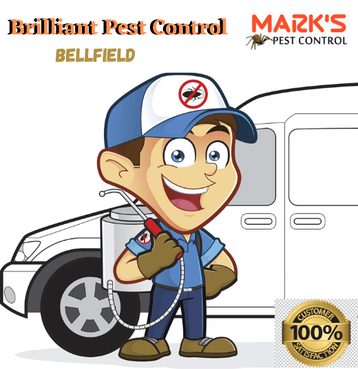 Brilliant Pest Control Bellfield