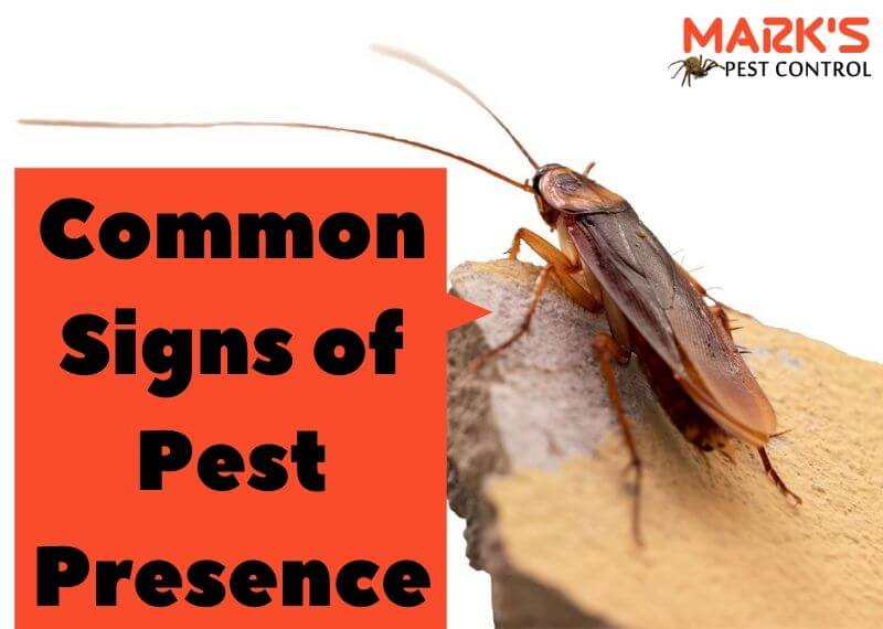 Common Signs of Pest Presence