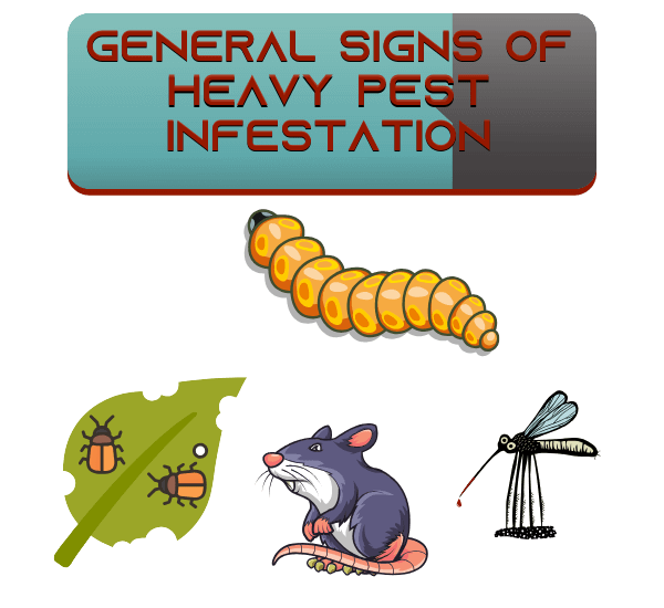 General Signs of Heavy Pest Infestation (1)