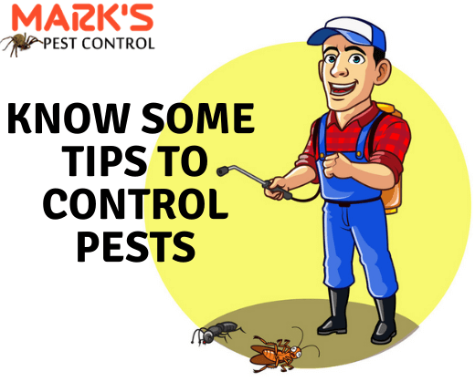How to control Pests-Marks Pest Control
