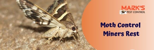 Moth Control Miners Rest