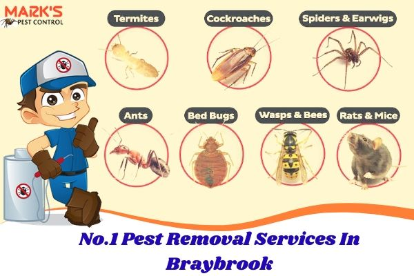 No.1 Pest Removal Services In Braybrook