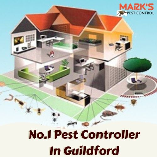 Pest Control Guildford
