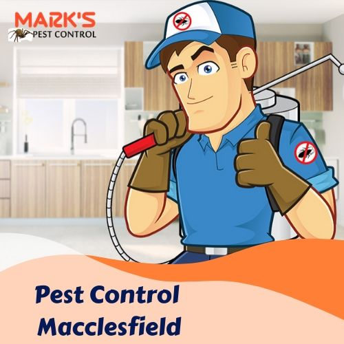 Pest Control Macclesfield