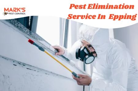 Pest Elimination Service In Epping