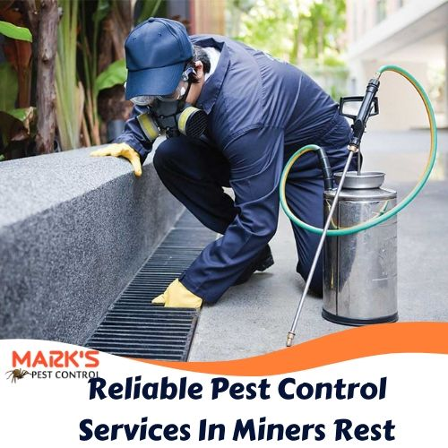 Reliable Pest Control Services In Miners Rest