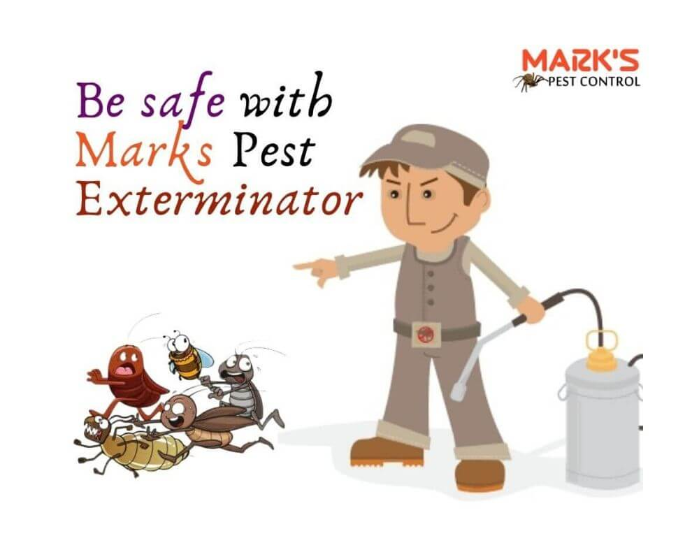 bee safe with marks pest control (1)