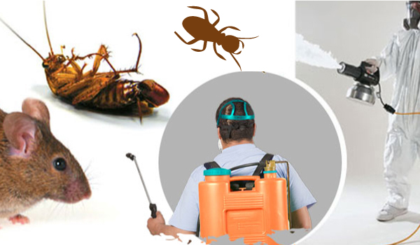 Building Pest Inspection Professionals