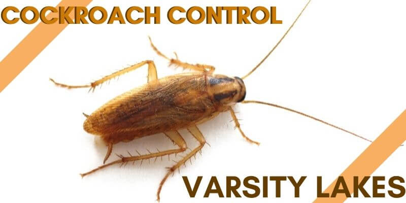 Cockroach control Varsity Lakes