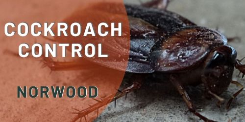 cockroach control norwood