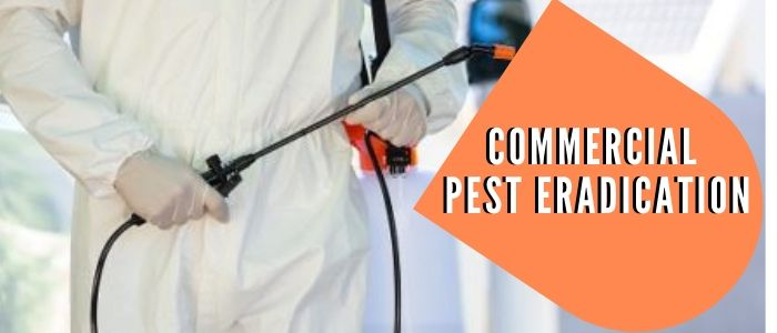 commercial pest eradication