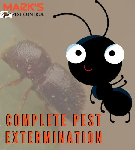 complete pest control norwood