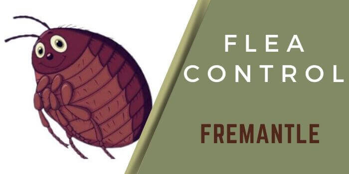 flea control Fremantle