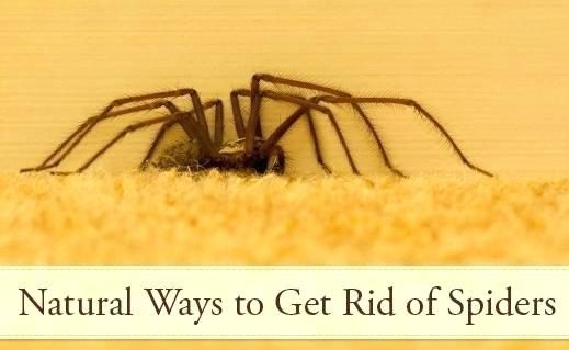 Get rid of spider removals