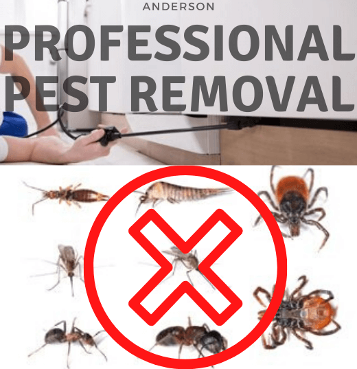 Professional Pest Removal