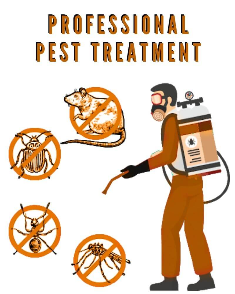 professional pest treatment